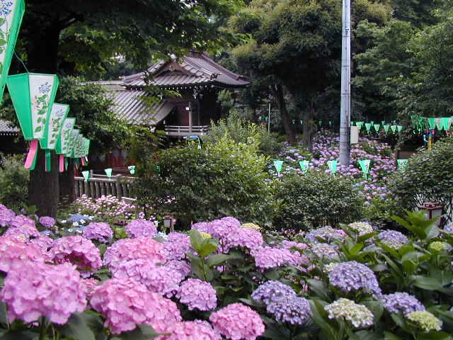 白山神社 / 東京都文京区 | 御朱印・神社メモ